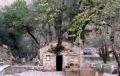 Biserica Sfânta Teodora din Peloponez: biserica din care au crescut copaci