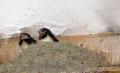 ŞTIREA ZILEI. S-au întors rândunicile. Noroc cu geamul de la ghenă
