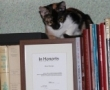 KIKI, o pisică foarte, foarte cultă si ahtiată după diplome