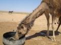 Apa din Bucuresti este de 50 de ori mai scumpă decât cea din Arabia Saudită