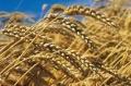 Federatia AGRO-FRĂTIA sustine desemnarea lui CĂLIN GEORGESCU în functia de PRIM-MINISTRU