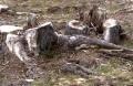 MAFIA PĂDURILOR A CÂSTIGAT. Camera Deputatilor a votat ÎMPOTRIVA opririi exportului ilegal de masă lemnoasă